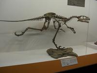 「大恐竜展」